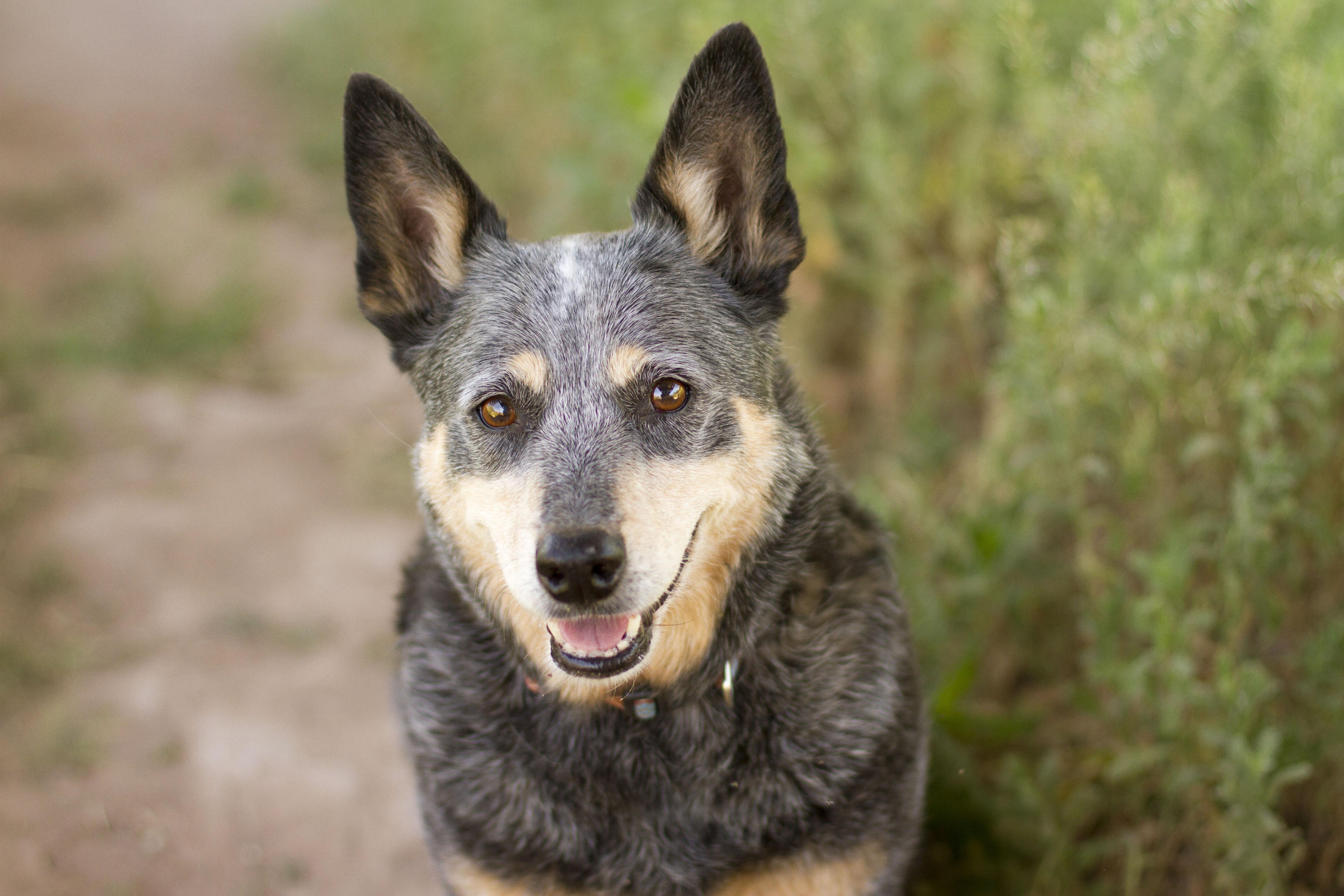 Beau Dog Name Meaning