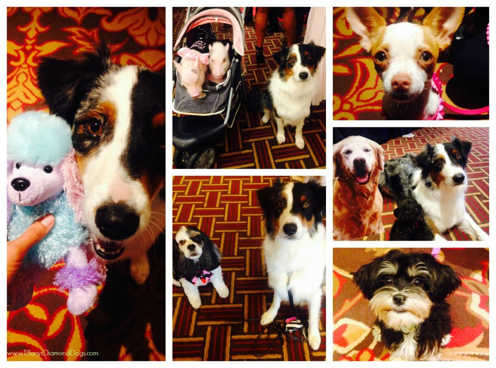 BlogPaws2