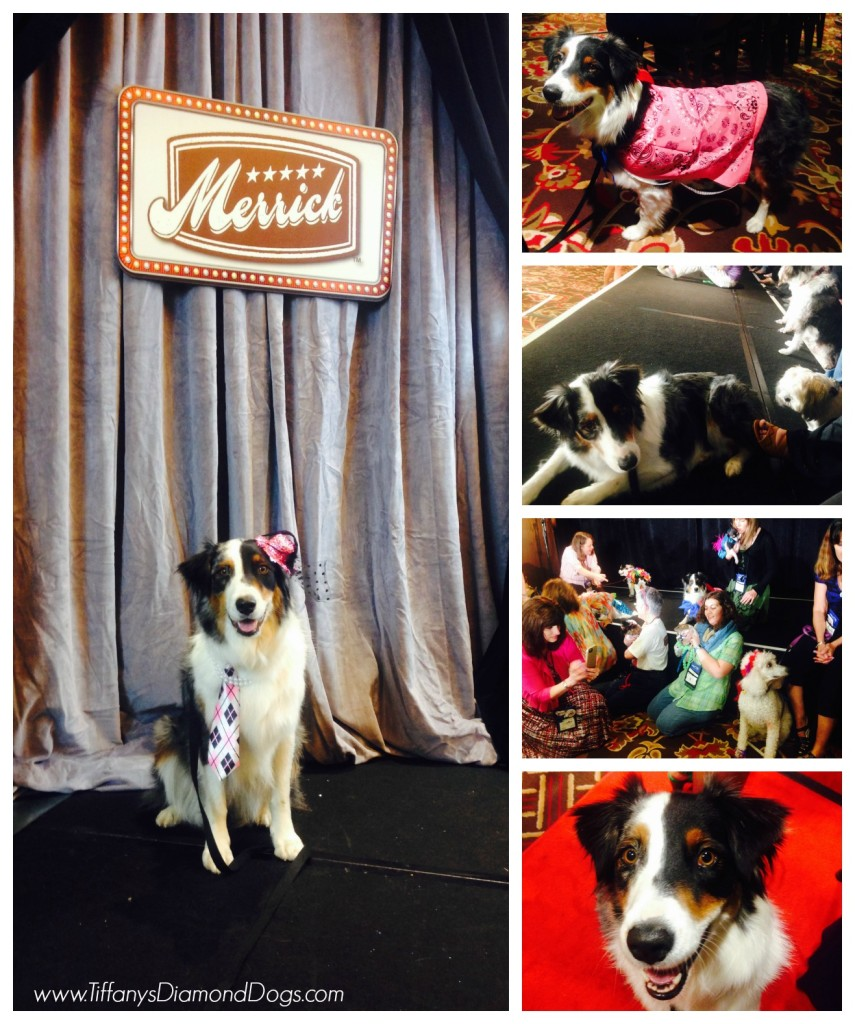 BlogPaws3