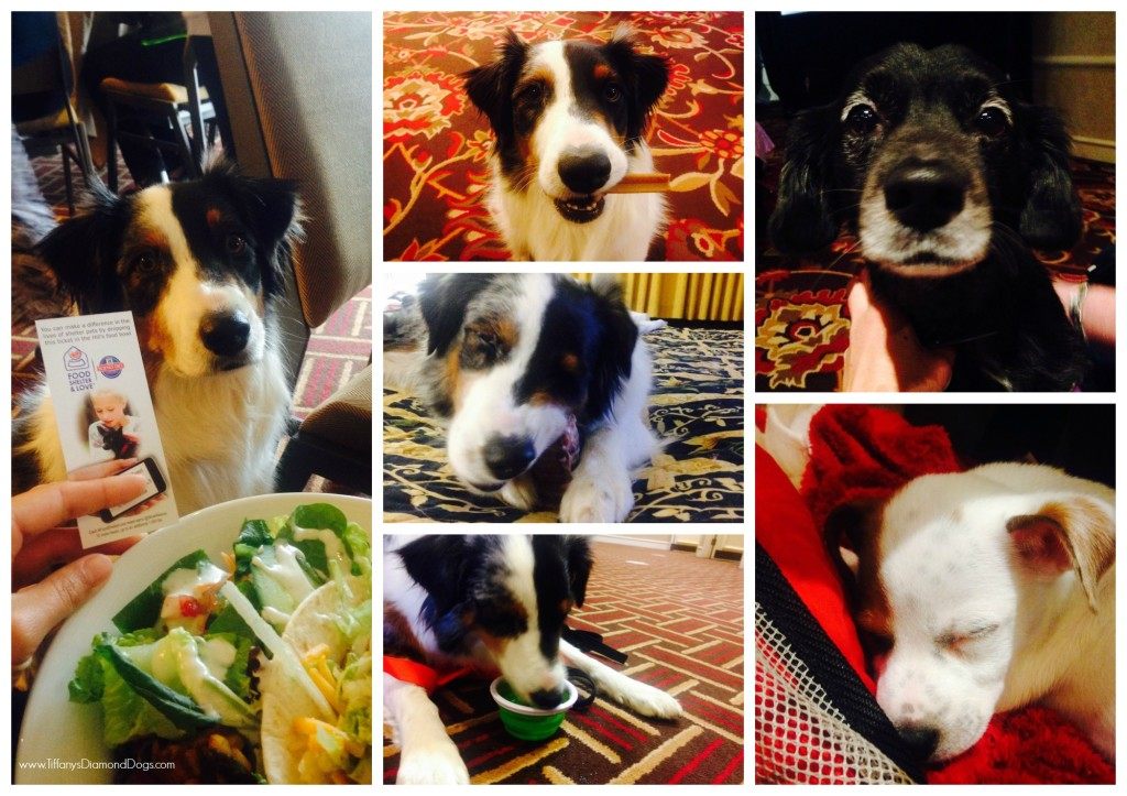 BlogPaws5