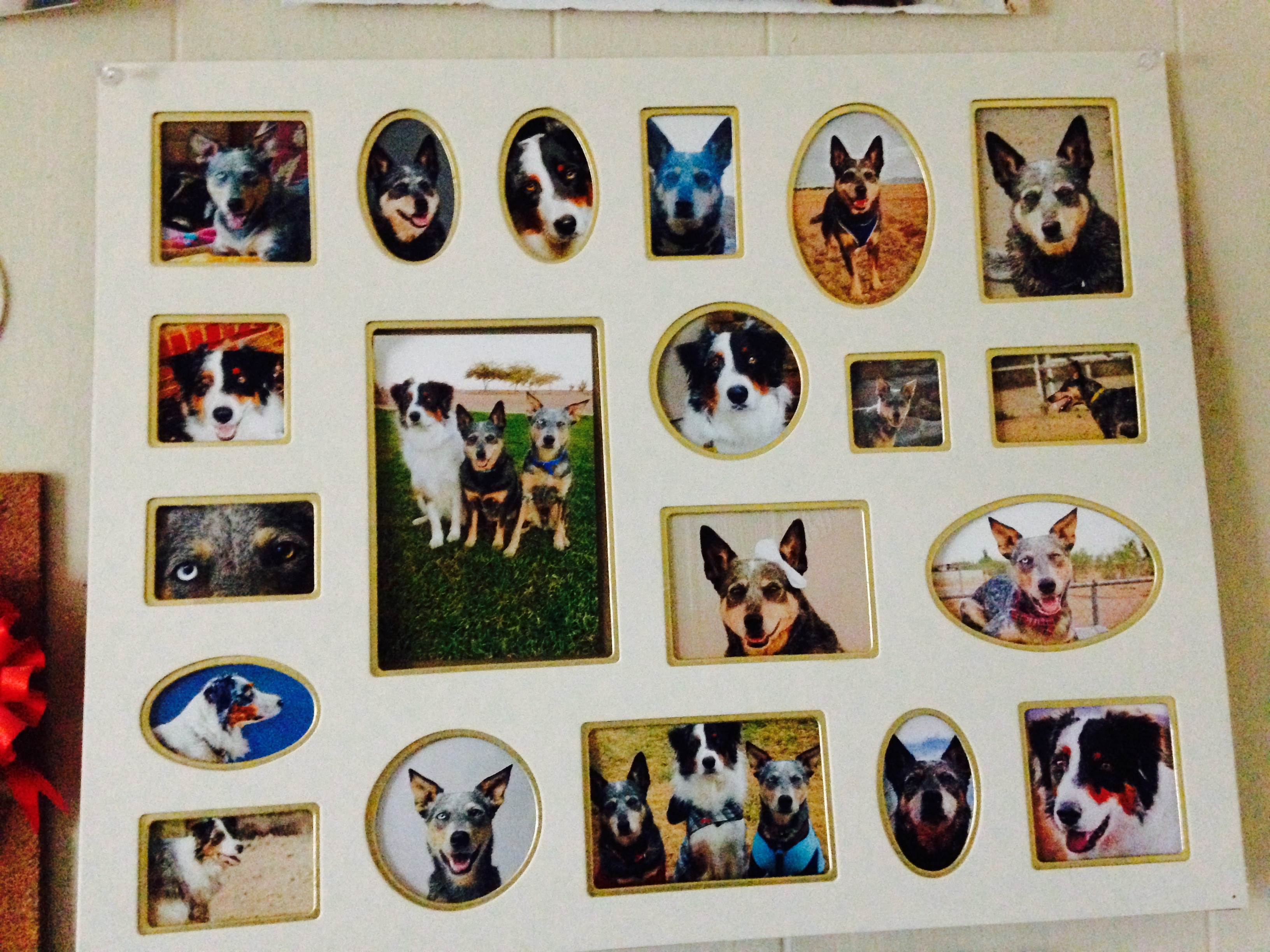 Diy dog photo frame decoration tiffanys diamond dogs if this is something you want to do for yourself heres all youll need to do solutioingenieria Gallery