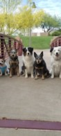 Meetup with The Super Collies