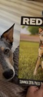 Bella and Kronos featured in RedBarn Pet Products Marketing Materials