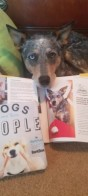 Feature in BarkPost and BarkBox book