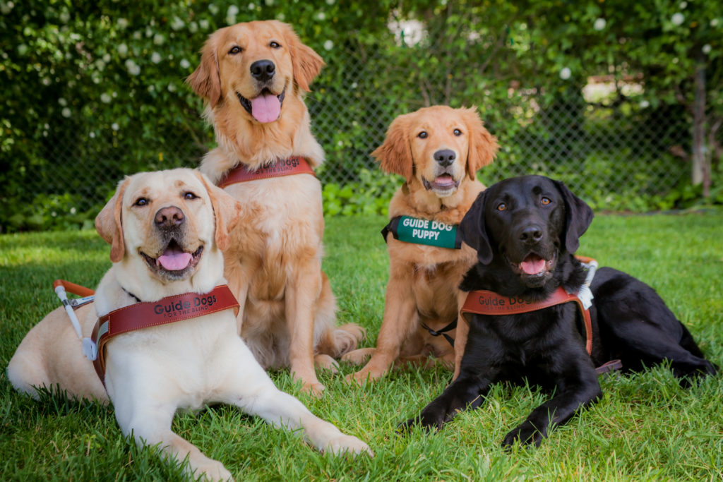 guide-dog-group