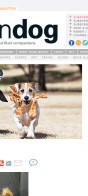 Bella featured on Modern Dog Magazine Website & Newsletter