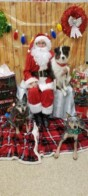 Photos with Santa at #Petsmart