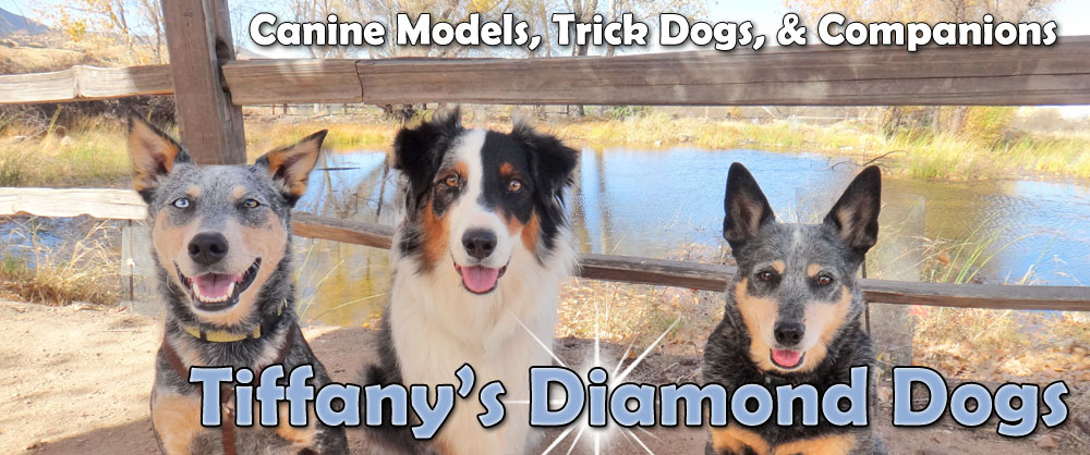 Tiffany's Diamond Dogs