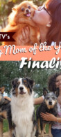 DogTV Dog Mom of the Year Finalist
